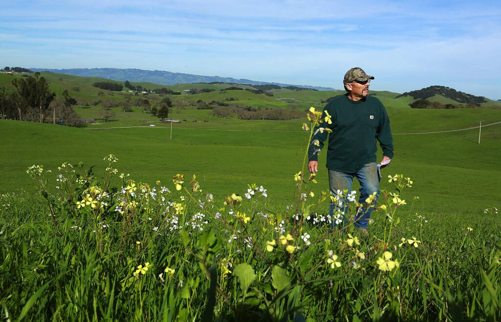 Hank Corda's ranch near Petaluma is a compost test site where scientists are measuring the growth of vegetation after an application of nutrient rich compost. (Photo by John Burgess/The Press Democrat)