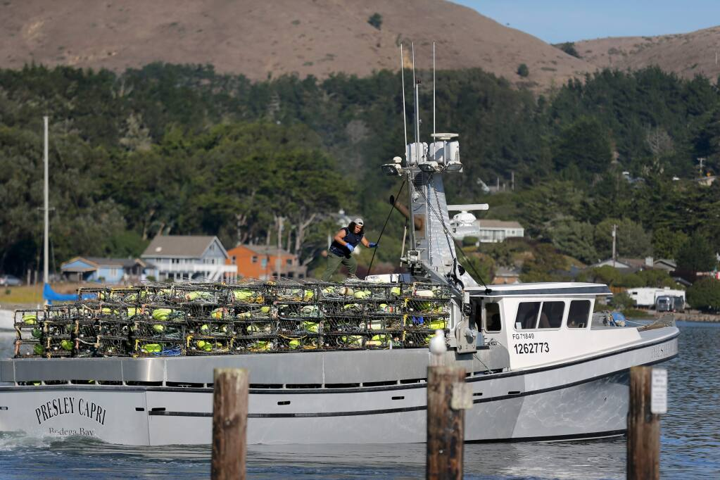 A crew member climbs atop stacks of crab pots on the fishing boat the 'Presley Capri' at Spud Point Marina in Bodega Bay on Monday, November 18, 2019. (BETH SCHLANKER/ The Press Democrat)