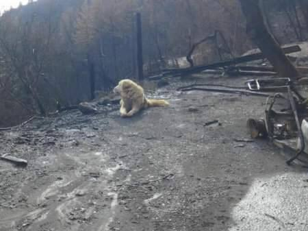 Madison awaits his owners after the Camp fire in Butte County. (K9 PAW PRINT RESCUE/ FACEBOOK)