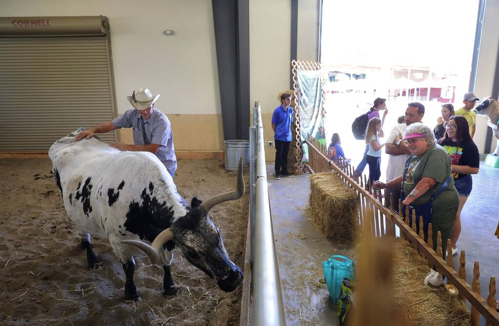Houston Evans pets Angel, a Texas longhorn, as visitors stop to look at her at the Sonoma County Fair in Santa Rosa on Monday, Aug. 6, 2018. (CHRISTOPHER CHUNG/ PD)