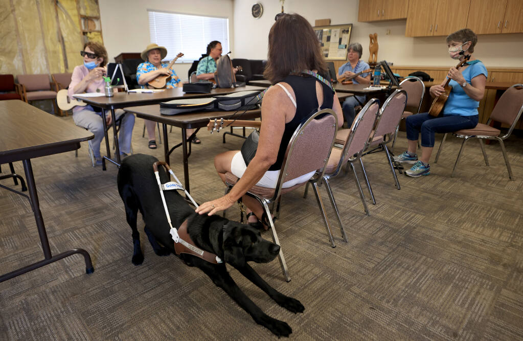 Maude the guide dog, takes a deep stretch as she and her handler Vicki Martin settle in for a ukulele class at the Earle Baum Center of the Blind in Santa Rosa, Tuesday, July 20, 2021 (Kent Porter / The Press Democrat) 2021