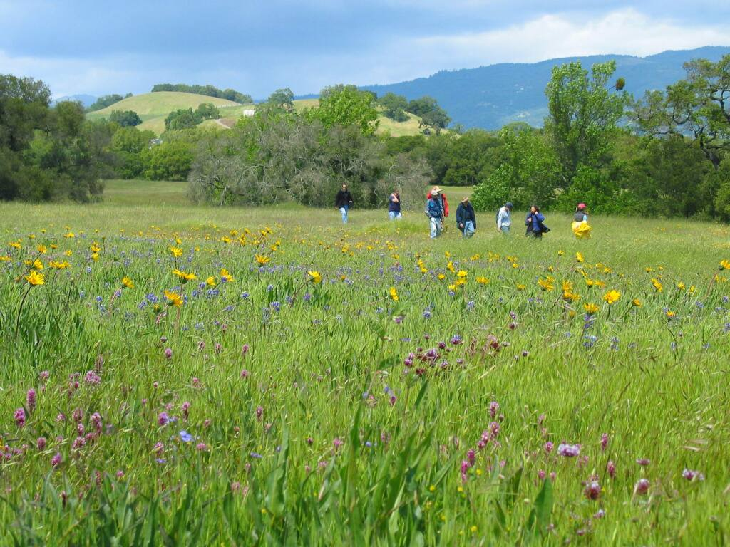 The wildflowers are in high bloom thanks to the winter rain.