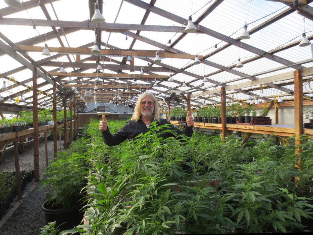 Jorge Cervantes of Sonoma in a thriving greenhouse somewhere in the Sonoma Valley. The county is proposing treating cannabis like other agricultural products in new General Plan rules. (Courtesy George Van Patten)