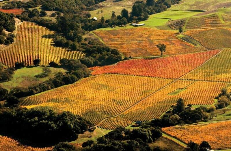 Vineyards in the Sonoma Valley near Kenwood turn from gold to crimson as the harvest comes to an end. (Chad Surmick/Savor Fall 2006)