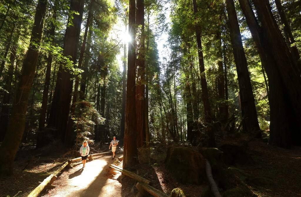 Sonoma County is home to many famous state parks, including Armstrong Woods and Annadel. (Christopher Chung/PD File)