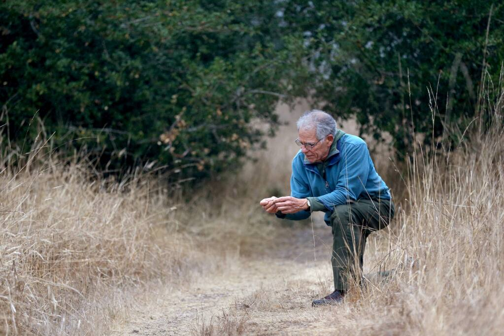 Richard Vacha, author of 'The Heart of Tracking: Inner and Outer Practices of Nature Awareness,' examines the contents of fox scat along Earthquake Trail at the Bear Valley Visitor Center on the Point Reyes National Seashore in Olema on Thursday, Nov. 14, 2019. (BETH SCHLANKER/ The Press Democrat)
