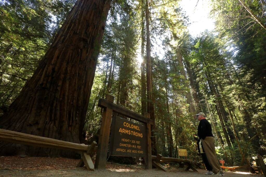 David Barnes, visiting from Ohio, takes in the 1400-year-old Colonel Armstrong redwood tree in Armstrong Woods State Natural Reserve, near Guerneville on Thursday, September 28, 2017. (Christopher Chung/ The Press Democrat)