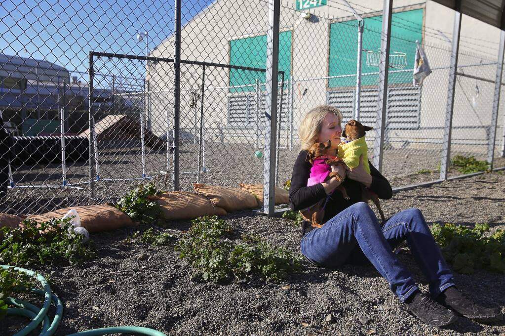 Volunteer Nan Sanchez-Cook cuddles with chihuahuas Daisy, left, and Minnie in an exercise yard at the Sonoma County Animal Shelter in Santa Rosa, on Friday, December 30, 2016. (Christopher Chung/ The Press Democrat)