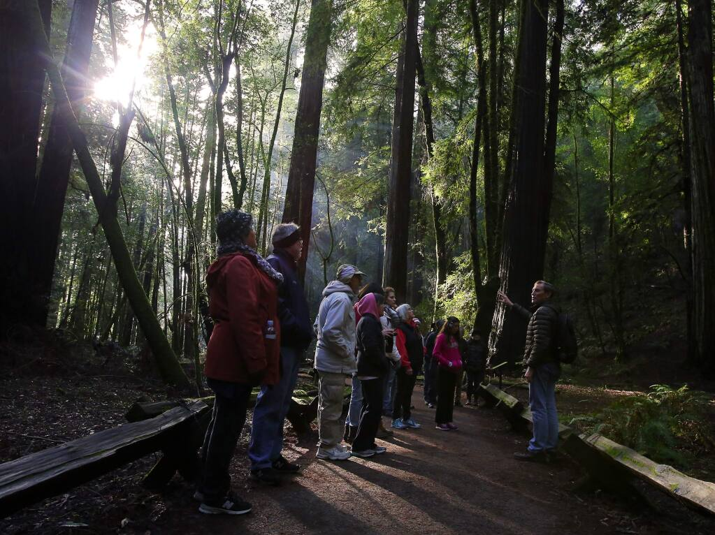 Stewards of the Coast and Redwoods volunteer Glen Blackley, right, leads a group hike on a New Year's Day tour of Armstrong Woods State Natural Reserve, on Sunday, January 1, 2017. (Christopher Chung/ The Press Democrat)