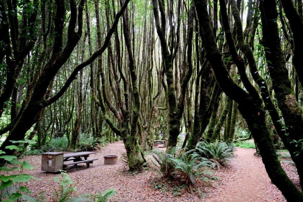 Campsite among the bay trees along the Gualala River. Photo: Stephen Nett