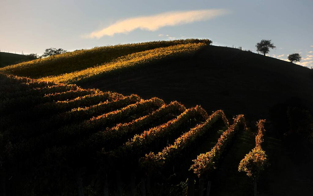 A vineyard catches the last light of the day along Westside Road near Healdsburg, Monday, Nov. 5, 2018. (Kent Porter / The Press Democrat) 2018