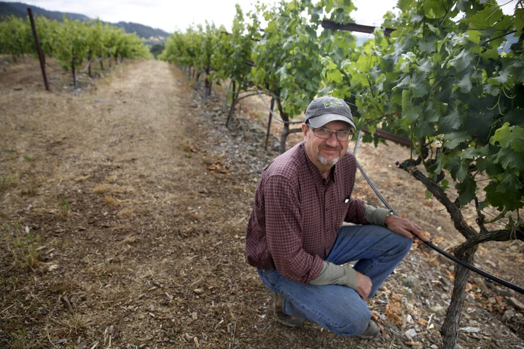 John MacLeod kneels next to old drip irrigation lines that will be replaced through a state grant at the MacLeod Family Vineyard in Kenwood, on Thursday, June 16, 2016. (Beth Schlanker / The Press Democrat)