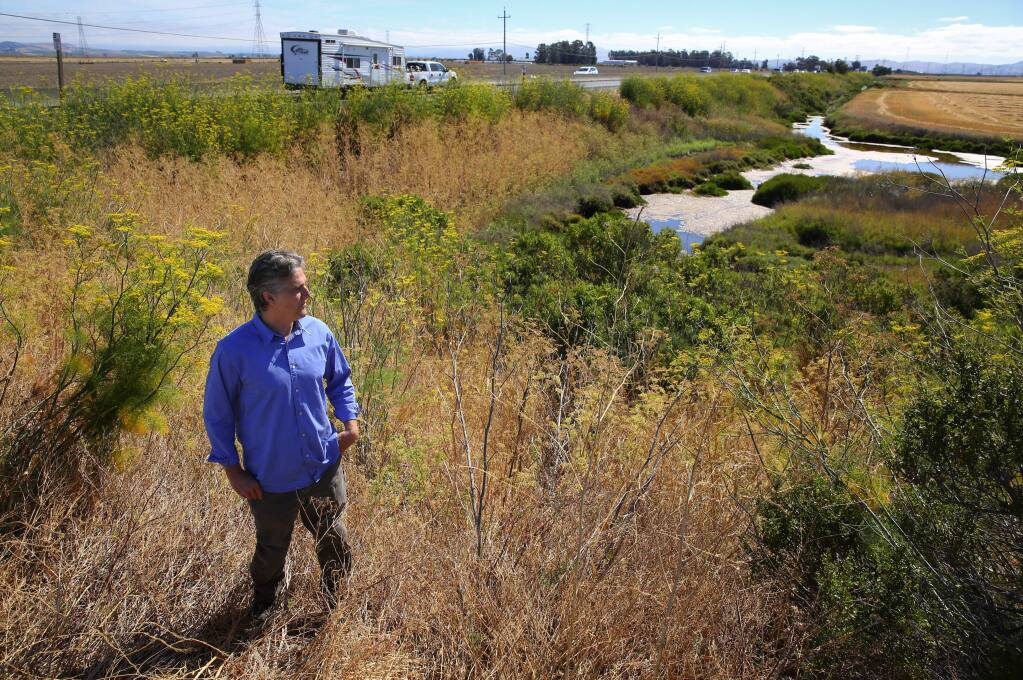 Fraser Shilling co-director of the Road Ecology Center has identified the stretch of Highway 37, east of Sonoma Raceway, as a wildlife crossing hot spot.(Christopher Chung/ The Press Democrat)