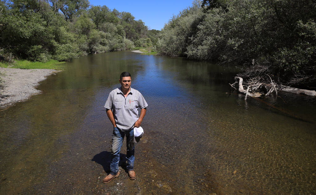 During this time in 2020, a dry year on the Russian River, the water was past the knees of Isual Macias of Hoot Owl Vineyards in the Alexander Valley. On Thursday afternoon, May 27, 2021 the water is even lower. (Kent Porter / The Press Democrat)