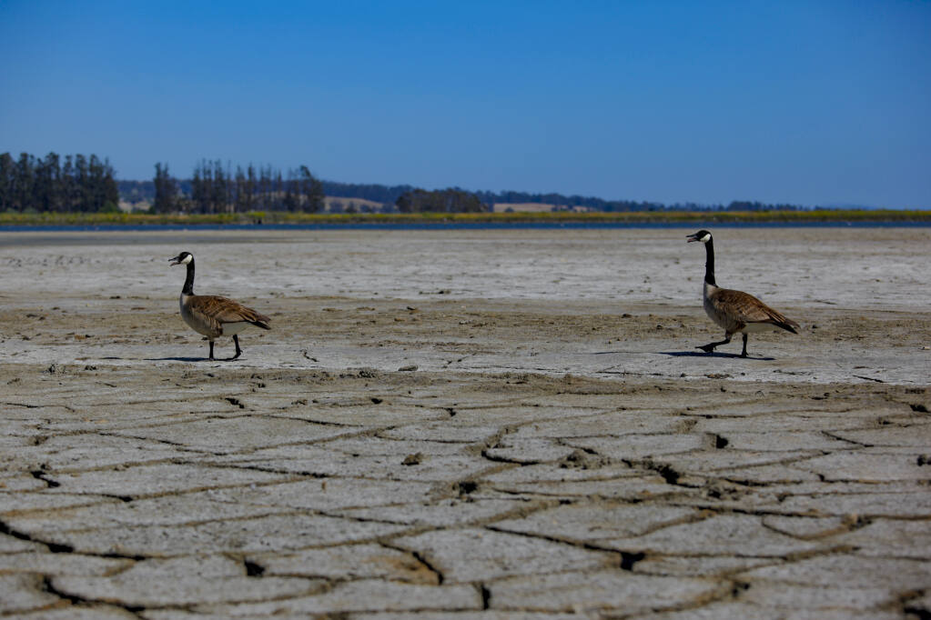 Shollenberger Park's wetlands is usually a playground for wildlife but the recent severe drought leaves the area parched and dry. (CRISSY PASCUAL/ARGUS-COURIER STAFF)