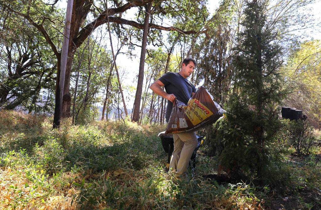 Adam Messner places mulch around a young redwood tree on his property near Calistoga on Thursday, Sept. 20, 2018. Messner and his wife, Allison, created an online landscape design service called Yardzen. (CHRISTOPHER CHUNG/PD)