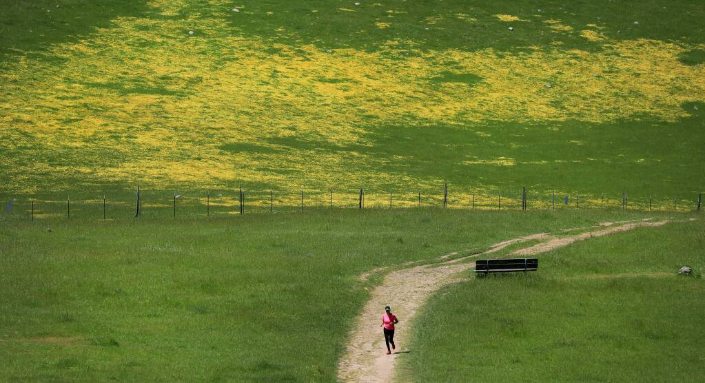 Anisha Petigara of Cotati gets an afternoon run in at Crane Creek Regional Park near Rohnert Park, Tuesday, April 23, 2019, amid blooming California buttercups and an abundance of allergy producing grasses. (Kent Porter / The Press Democrat) 2019