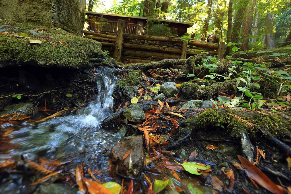 Water flows from a colvert into Dutch Bill creek in the Alliance Redwoods in Camp Meeker. The water pumped from the Russian River will return to the river while raising water levels, allowing coho salmon fry to survive during times of drought. (JOHN BURGESS / The Press Democrat)