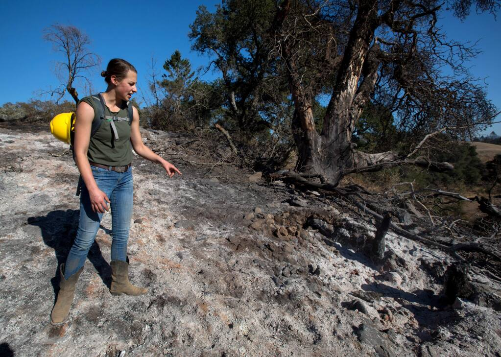 Stephanie Beard, Pepperwood's communication specialist, surveys fire damage where a tree;s ashes lay on the ground on Friday, Nov. 8, 2019. The recent Kincade fire burned over many of the preserve's areas still recovering from the Tubbs fire. (Darryl Bush / For The Press Democrat)