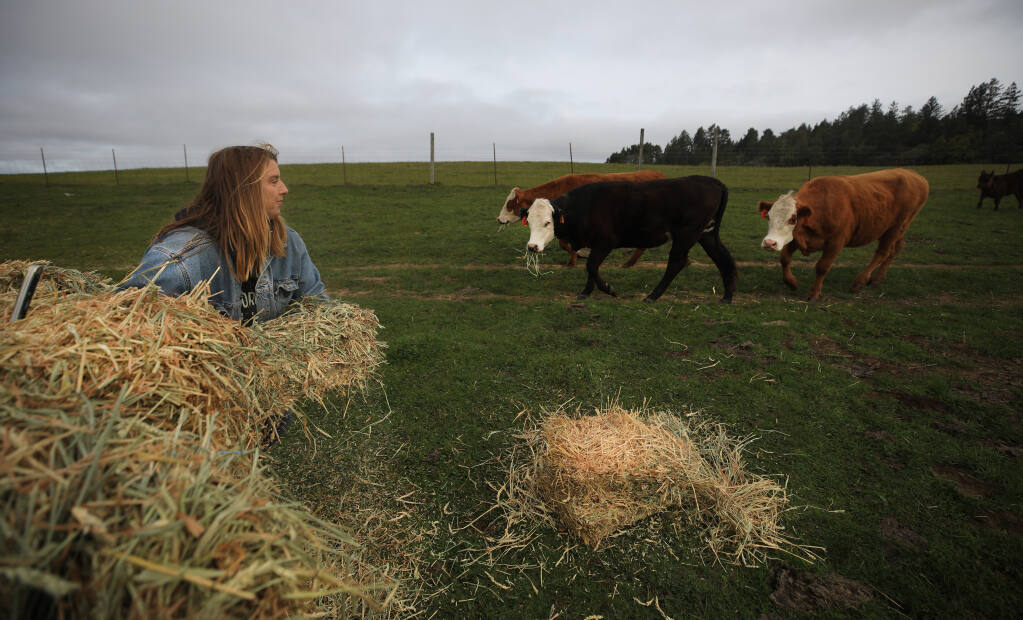 Kelly Barnett, the daughter of Joan and Walt Ryan, feeds Angus and Hereford cattle on the family's 800-acre ranch above Bodega, Wednesday, March 17, 2021. (Kent Porter / The Press Democrat)