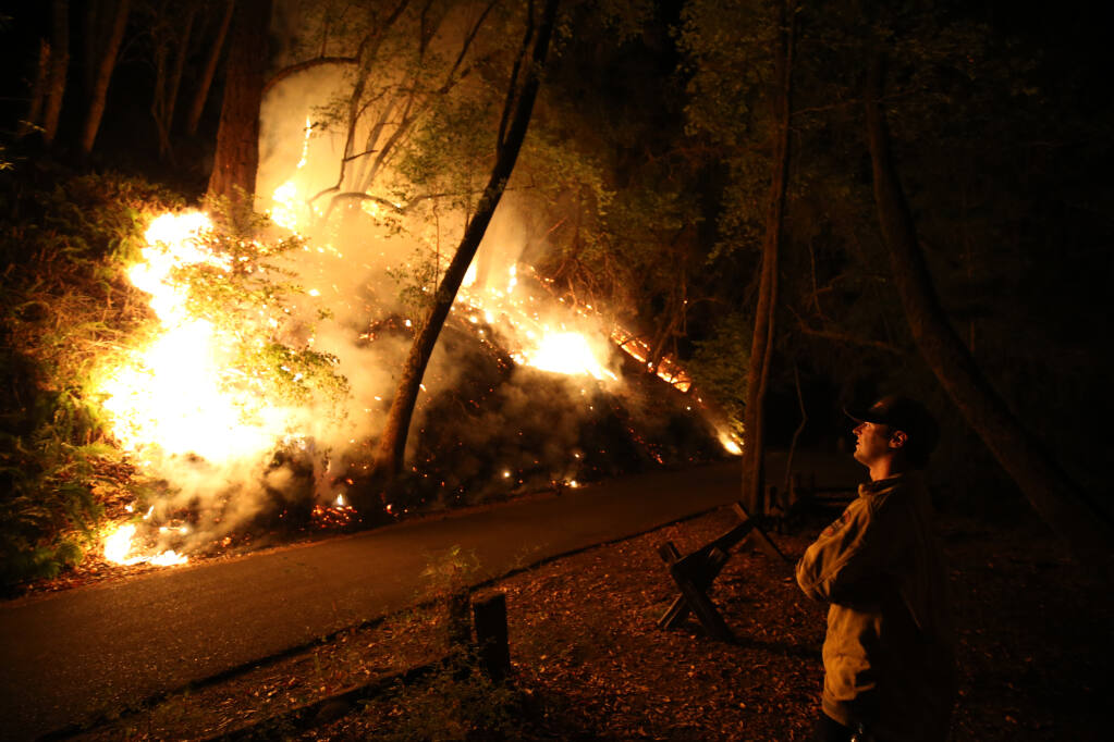 A firefighter monitors the Walbridge fire as it slowly burns inside Armstrong Redwoods State Natural Reserve. (BETH SCHLANKER / The Press Democrat, 2020)