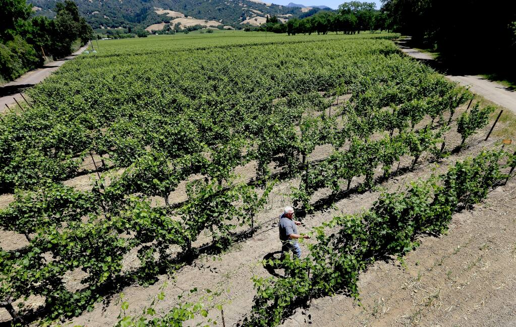 A move by Sonoma County winegrowers to form an irrigation district has alarmed environmentalists who say the proposal appears to only deal with the water needs of agriculture. (Kent Porter / PD FILE)