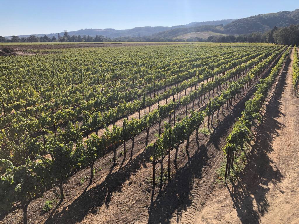 The 10-acre Williamson Family Vineyard is located along Highway 29 and borders Dry Creek at the base of the Mayacamas Mountains on the western side of Napa Valley in the Oak Knoll American Viticultural Area. Seanne and Steven Contursi of Arrow&Branch Estate Vineyard purchased the property in October 2020 and plan to build a winery there, with the first crush hoped for in 2022. (courtesy photo)