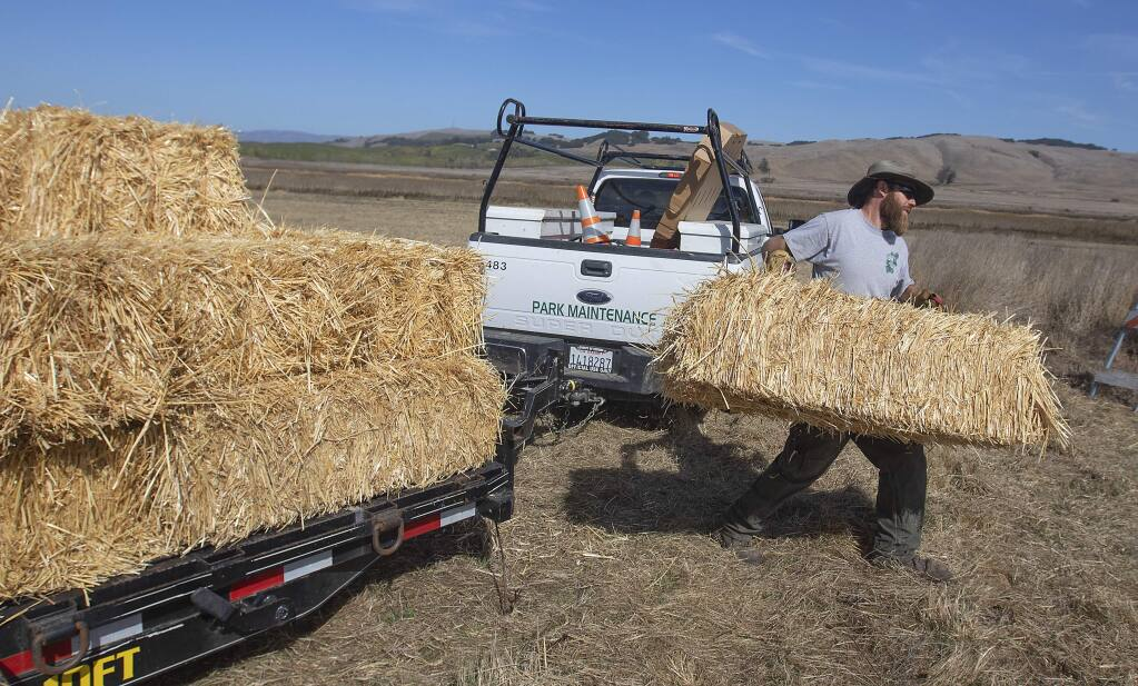 Trevor Thompson moves hay bales for the parking area in preparation for the Tolay Fall Festival. (JOHN BURGESS/ PD)