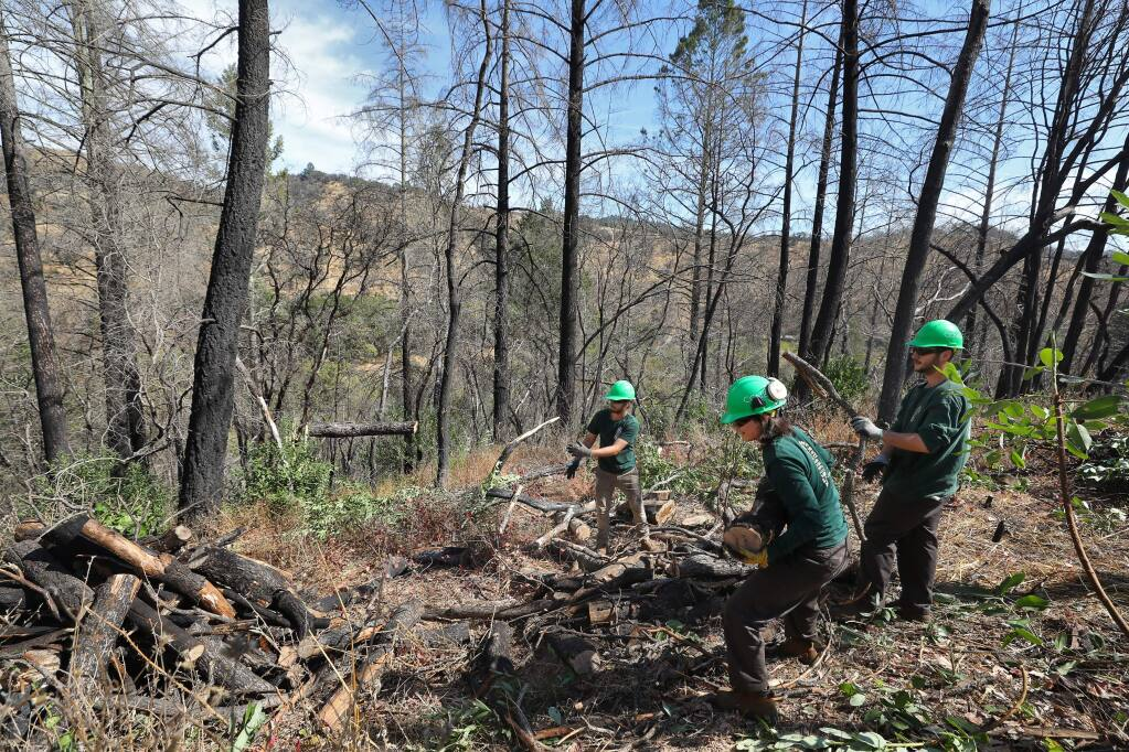 Conservation Corps North Bay workers Ethan Werby, left, Diego Salanueva, and Bo Dougan make a burn pile out of a dead tree that was cut down, in the Mark West area near Santa Rosa on Tuesday, October 8, 2019. (Christopher Chung/ The Press Democrat)
