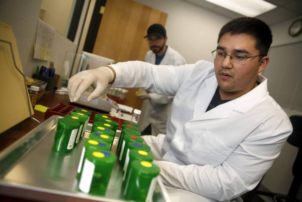Chemists Troy Baker and Ross Mohs, rear, review samples for accuracy as they prepare cannabis potency samples for analysis at Pure Analytics in Santa Rosa, on Thursday, October 27, 2016. (BETH SCHLANKER/ The Press Democrat)