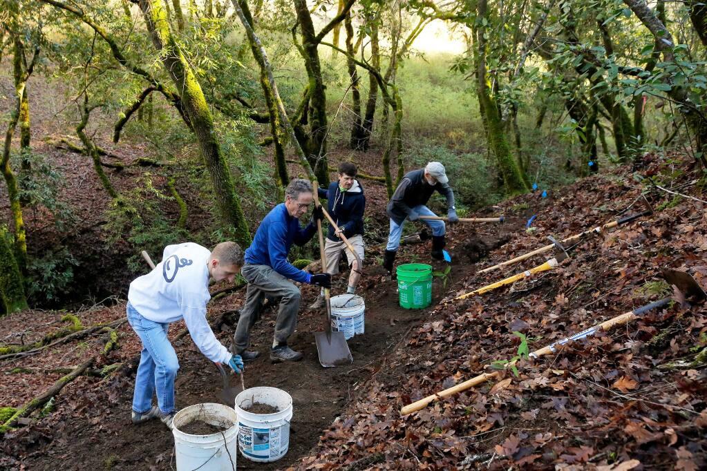 Volunteers, from left, Turner Shaw, Brian Geagan, Steve Spitler and Tim Mayer build a trail in Riddell Preserve during a LandPaths Trail Workday in Healdsburg on Saturday, Dec. 28, 2019. (Alvin Jornada / The Press Democrat)