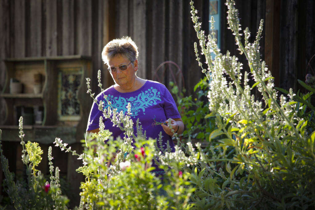 Karen Guma, a master gardener, grows many native plants in her Petaluma garden to avoid water waste which is particularly relevant during the Sonoma County drought emergency conditions. (CRISSY PASCUAL/ARGUS-COURIER STAFF)