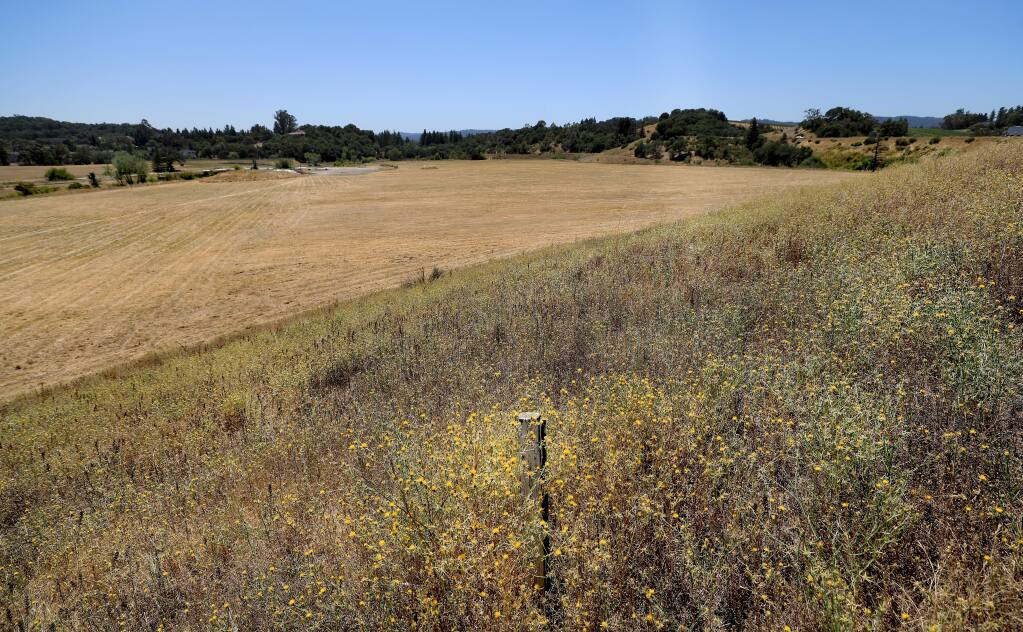 The site of a proposed 352-unit housing project and a luxury hotel on Healdsburg's north end, Wednesday, July 31, 2019. (Kent Porter / The Press Democrat)