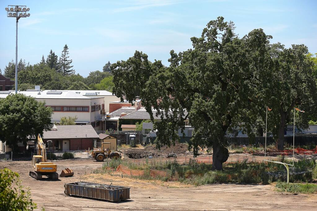Construction continues at SRJC's Bailey Field around an oak tree in Santa Rosa on Monday, June 24, 2019. The tree is scheduled to be removed this summer.(Christopher Chung/ The Press Democrat)