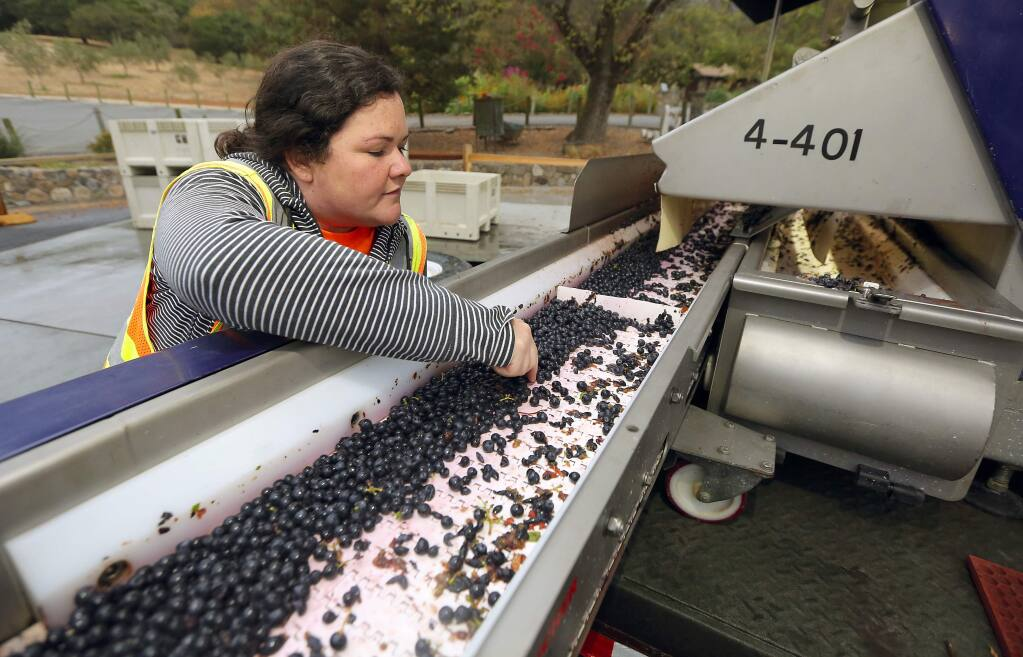 Gundlach Bunschu winemaker Anne Dempsey rents a computer-assisted optical sorter for their high-end, reserve cabernet sauvignon from their hillside vineyards. The technology eliminates green and bruised berries from the fermentation tanks. (John Burgess/The Press Democrat)