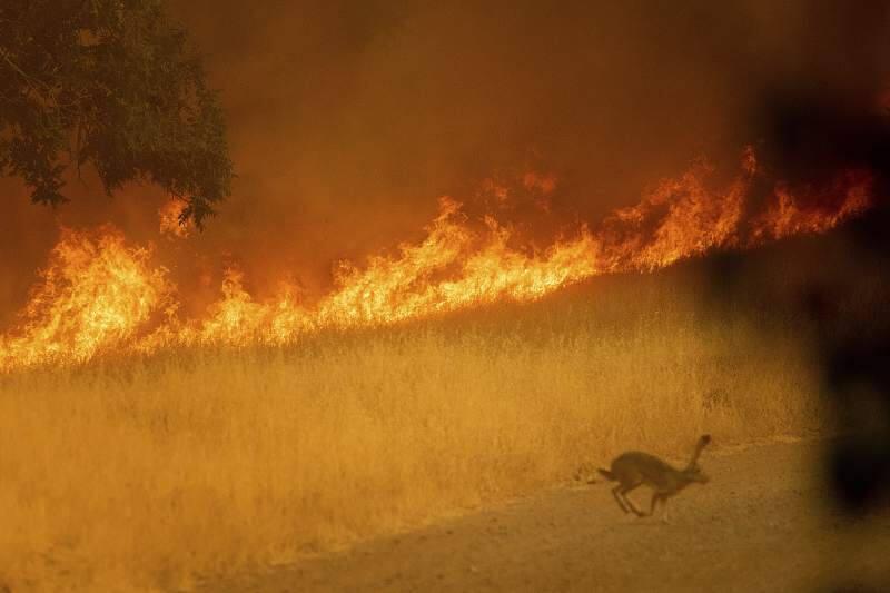 The Yolo Fire burns in 2020. AP photo.