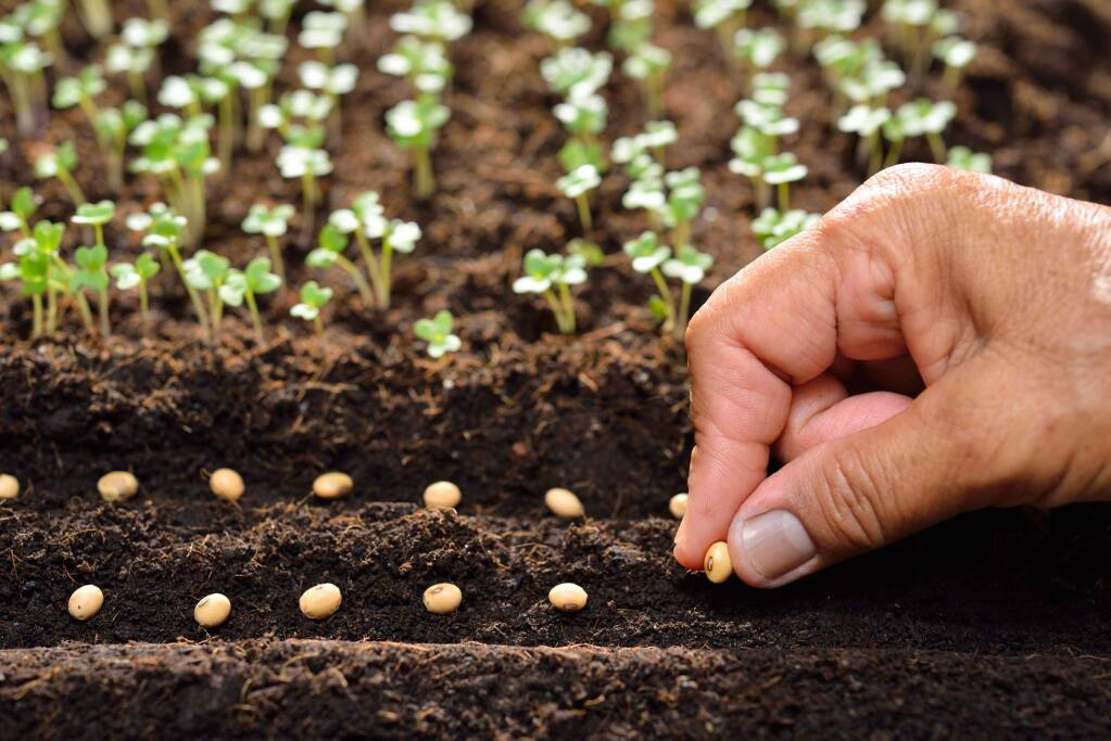 How to best grow veggies from seeds and starts in your garden
