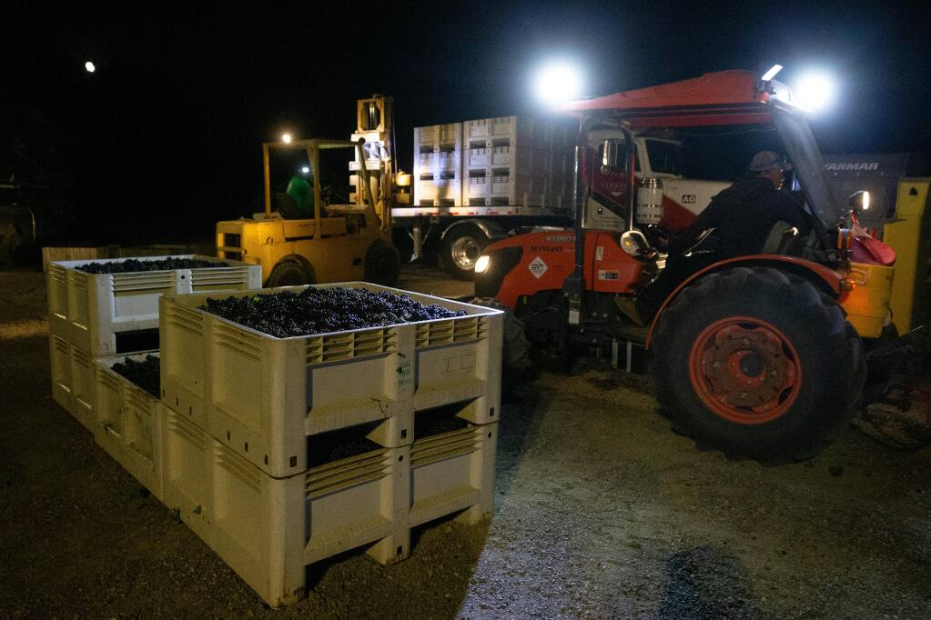 Vineyard workers load bins full of pinot noir grapes onto a truck at Sasaki Vineyards which will made into sparkling wine by Gloria Ferrer in Schellville, California, on Wednesday, August 5, 2020. (Alvin A.H. Jornada / The Press Democrat)