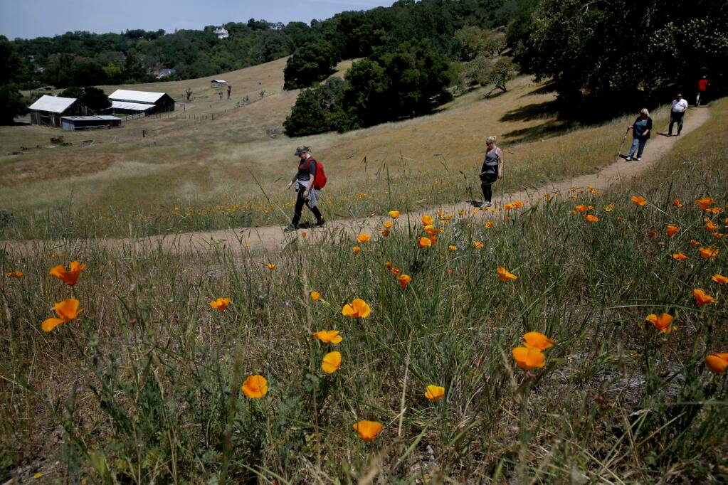 Alison Finley, left, hikes with her sister Rebecca, mother Ellen, and father John, at Montini Open Space Preserve on Sunday, May 10, 2015 in Sonoma, California . (BETH SCHLANKER/ The Press Democrat)
