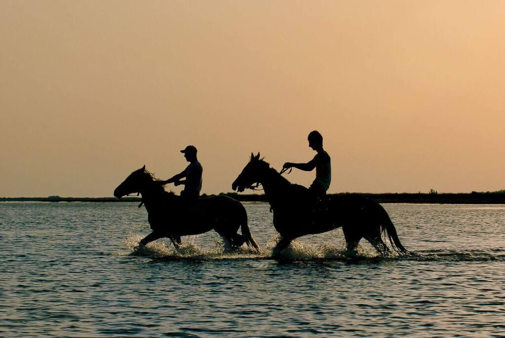 "Sebastopol Documentary Film Festival""Atlan,"" Iran, 2015, 62 min. A colorful look at the horse culture of the Iranian Turkmen, and their breathtaking horse races. In Arabic with English subtitles. 5:30 p.m. Saturday, March 19. Rialto Cinemas, Sebastopol."
