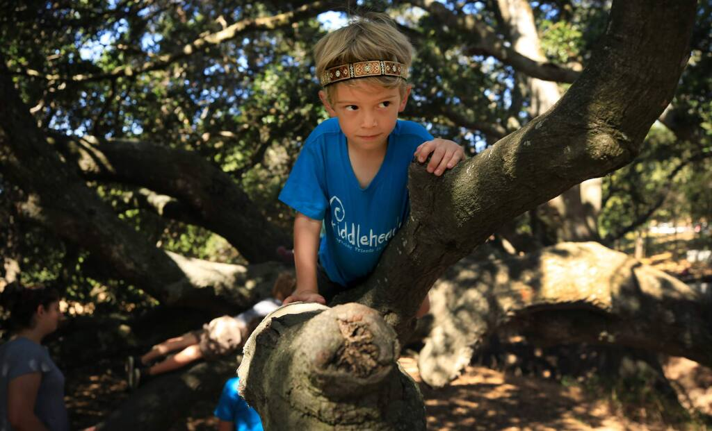 Ezra Brashear Ramirez braves a tree climb, Wednesday July 12, 2017 as he takes part in Fiddleheads Camp, run by Oakland based, Seeds of Awareness at Helen Putnam Regional Park in Petaluma. (Kent Porter / The Press Democrat) 2017