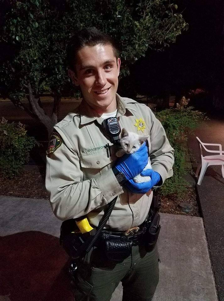 Deputy Woodworth and the kitten he rescued from the highway on Sunday, July 23, 2017. (SONOMA COUNTY SHERIFF OFFICE/ FACEBOOK)
