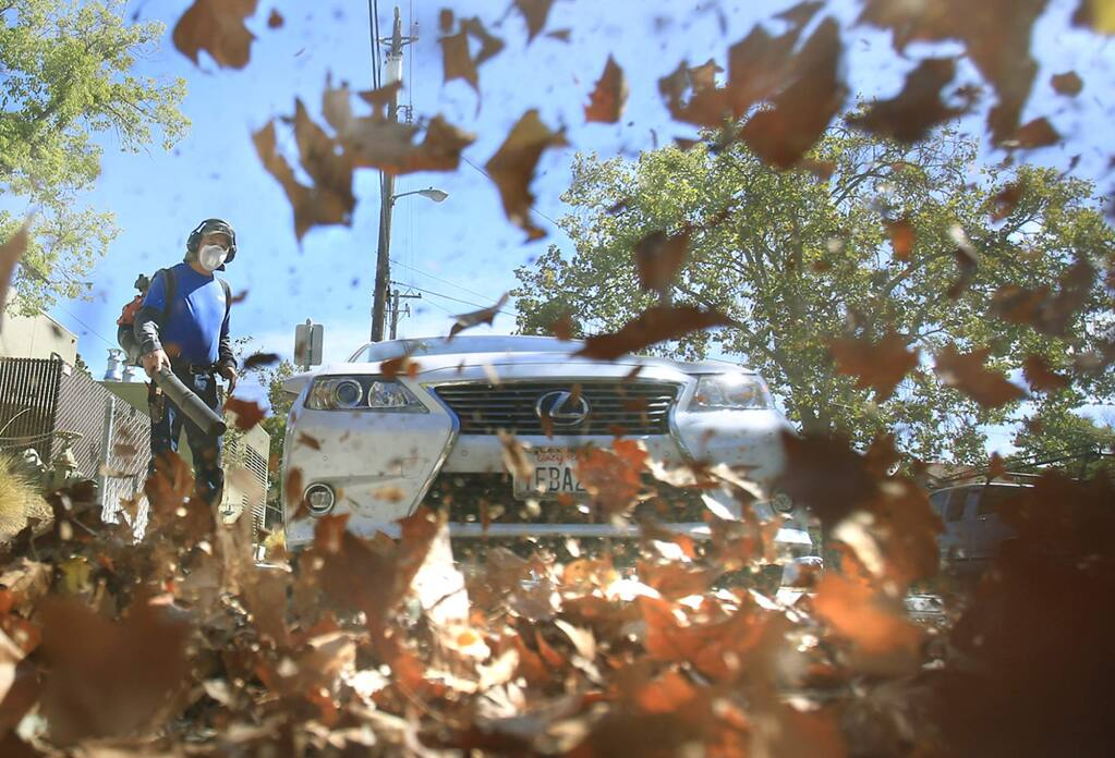 Cesario Contreras of Waldron Landscape uses a gas-powered leaf blower to round up sycamore leaves behind Sonoma Valley Hospital, Tuesday Sept. 29, 2015. (Kent Porter / Press Democrat)