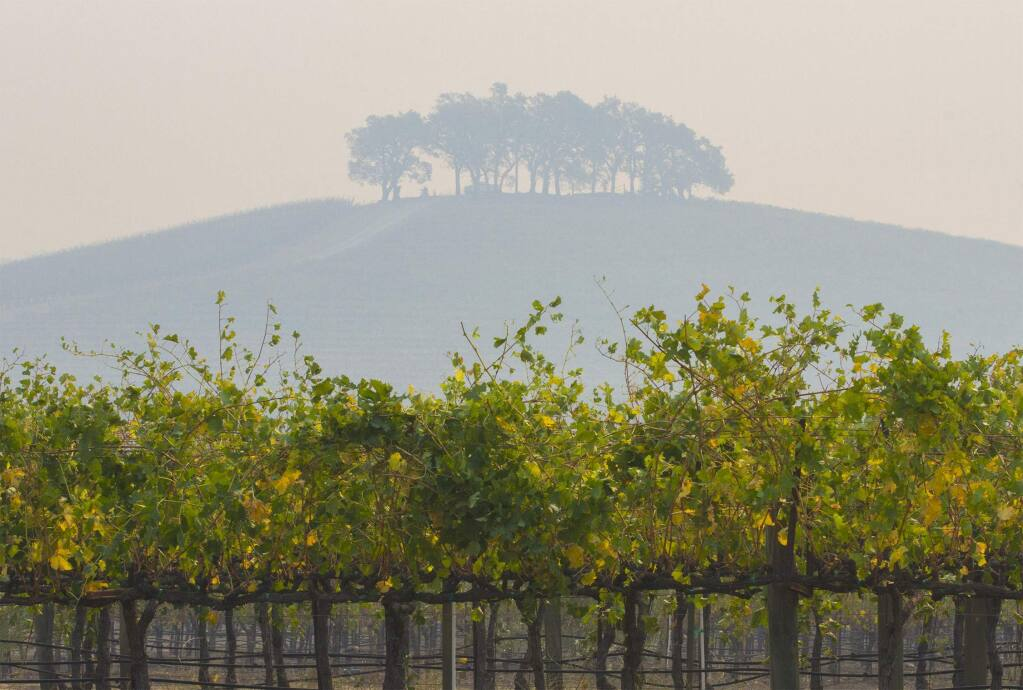 A hilltop on the Kunde Family winery estate. A blanket of smoke in October 2017 made the distant hills appear somewhat ethereal. (Photo by Robbi Pengelly/Index-Tribune)