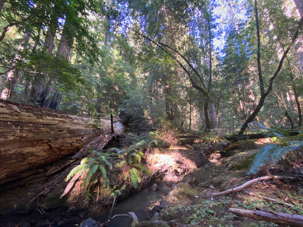 The Mailliard Ranch in Mendocino County.  (Marcos Castineiras / Save the Redwoods League)