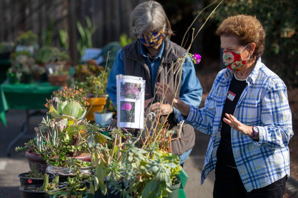 Teresa Breazeale, right, and Rita McMillan arrange a display at the Men's Garden Club of Santa Rosa plant sale in 2020. This month, plant sales continue at many area gardens and nurseries, in Santa Rosa, Petaluma and other towns. (Alvin A.H. Jornada / The Press Democrat)
