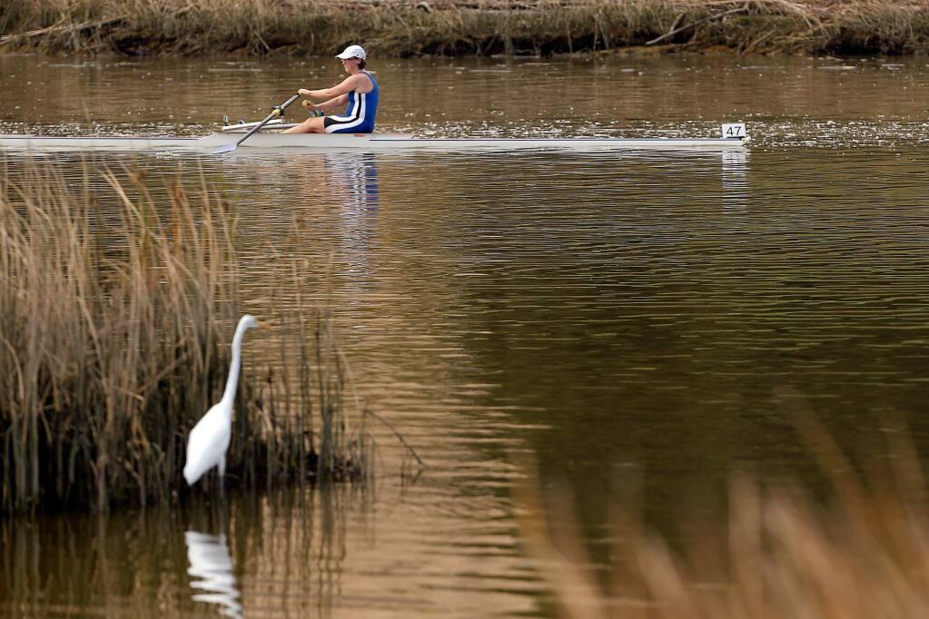 A great egret watches Rebecca Clark of the Berkeley Paddling and Rowing Club paddle past the Petaluma Marina as she competes in the Petaluma River Marathon, in Petaluma, California on Sunday, September 3, 2017. (Alvin Jornada / The Press Democrat)