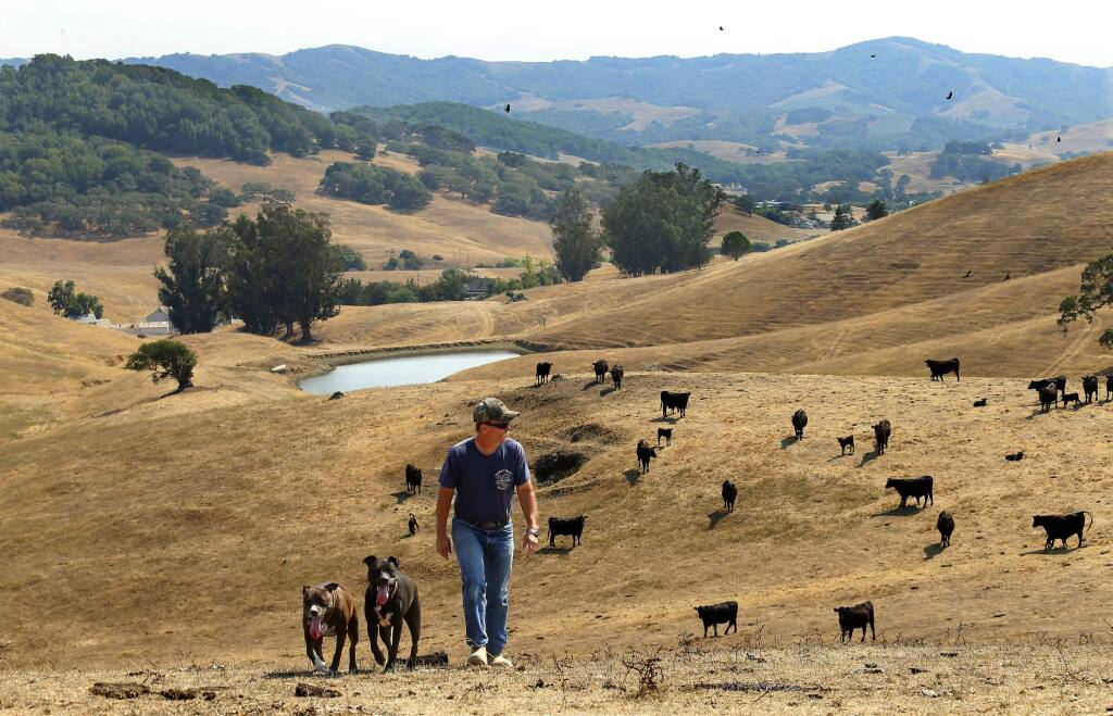 Mark Glen walks on his 230-acre Glenn Ranch just a few miles east of Petaluma. The property is a potential Open Space District acquisition. (JOHN BURGESS / The Press Democrat)