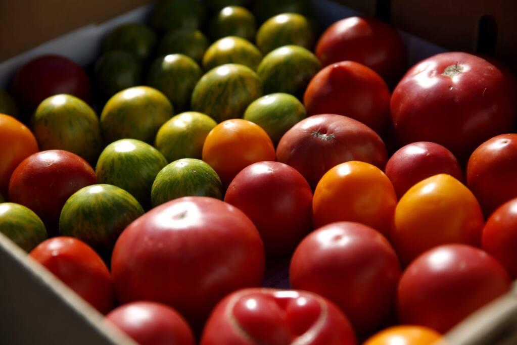 A variety of ripe tomatoes harvested at Middleton Farm in Healdsburg, on Thursday, September 22, 2016. (BETH SCHLANKER/ The Press Democrat)