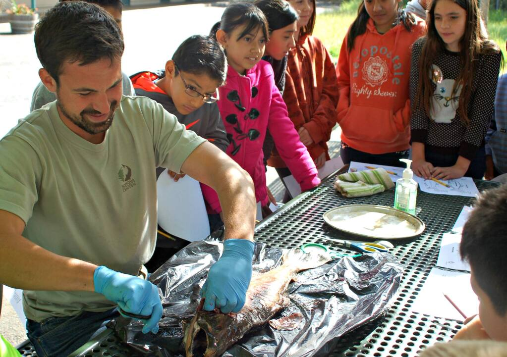 Lorna Sheridan/Index-TribuneFlowery School fifth graders watched Tony Passantino dissect a salmon as part of a classroom unit on the watershed, brought to the schools by the Ecology Center.
